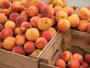 prodam-prodazha-ispanskih-persikov-i-nektarin--f924-1372685330716042-5-big